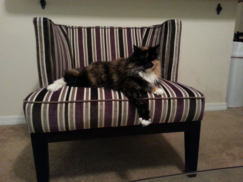 She claimed this chair within 5 minutes of it coming into the living room.