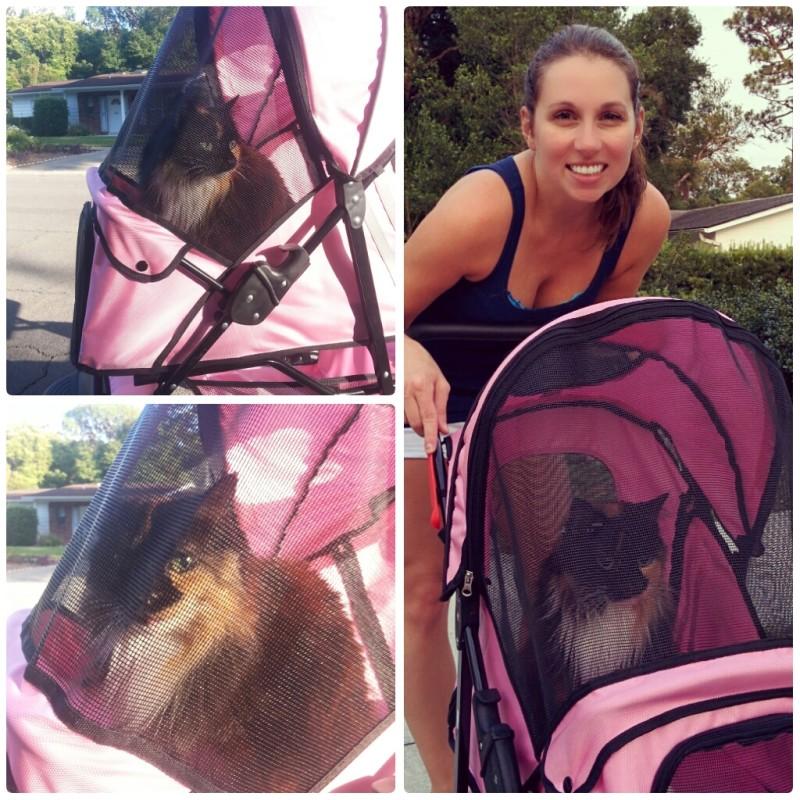 A pink cat stroller!!