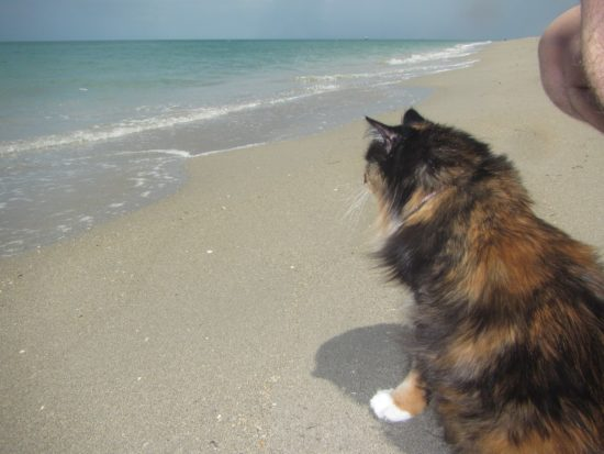 What cat would greet the incoming surf with curiosity? Lexi did.